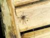 spider3 (Custom)