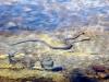 water-snake-001.jpg