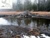 beaver_lodge_spring_2012