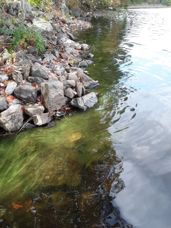 Dead Cyanobacteria