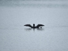 DSC_4393_01_loon-compressed